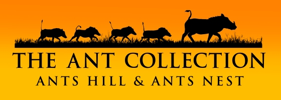 Ant Collection Logo - close up