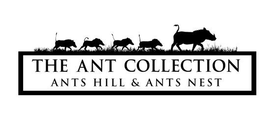 Ant Collection Logo - framed text